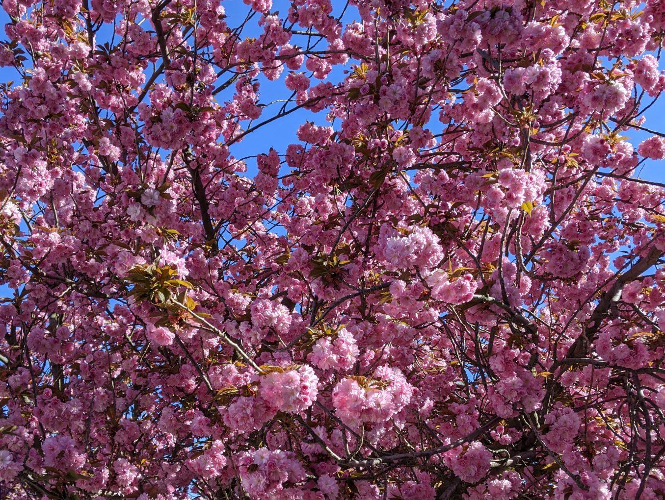 Jarními akcemi nešetříme